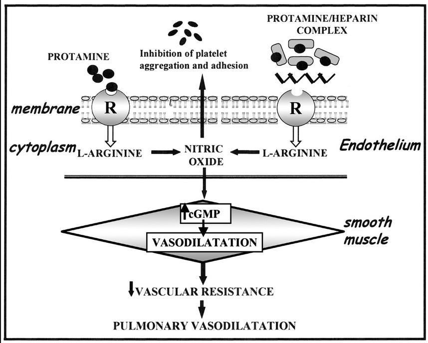 protamine-rx